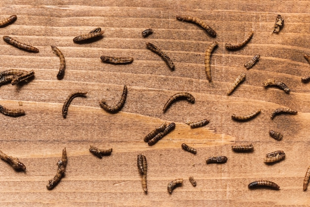 Fried worms on wooden board top view