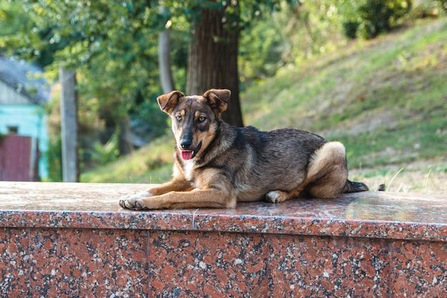 Дружелюбная заброшенная бездомная уличная собака мирно лежит на мраморной скале в городском парке