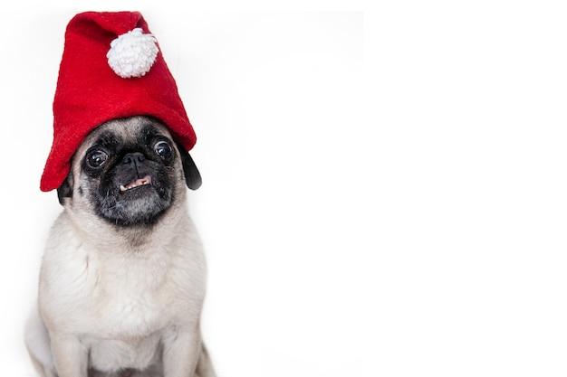 Дружелюбный рождественский мопс в шляпе санты.