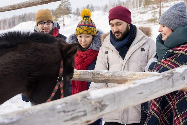 牧場で馬を見て友達