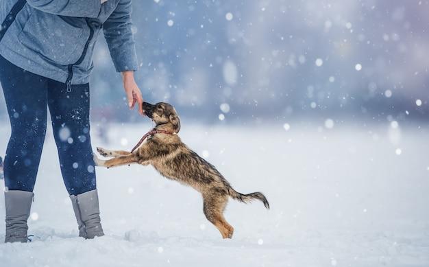 友情、ペット、そして人間。雪の日の女性と彼女の犬