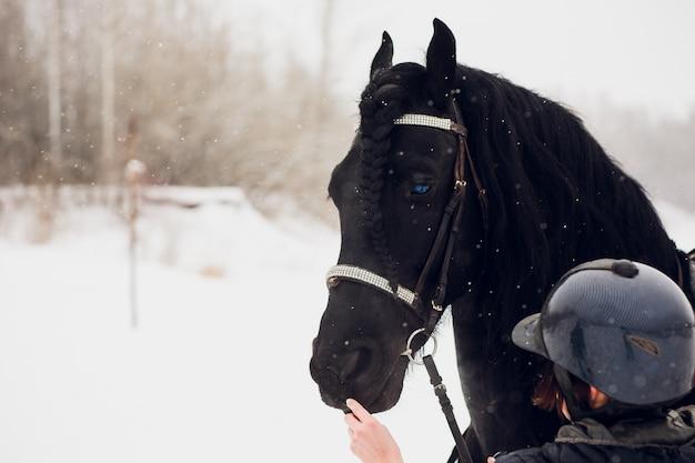 Friesian stallion running in winter field.