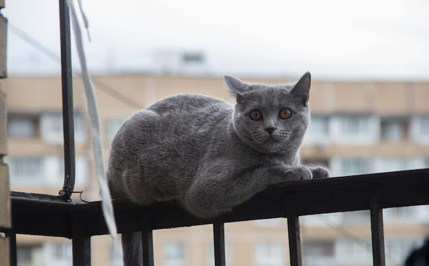 Испуганный и удивленный серый кот смотрит вверх с широко открытыми глазами на белом фоне