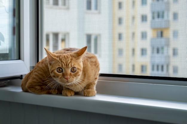 Испуганный рыжий котенок сидит на подоконнике с москитной сеткой
