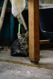 廃屋でおびえたホームレスの子猫がテーブルの脚の後ろに隠れました。