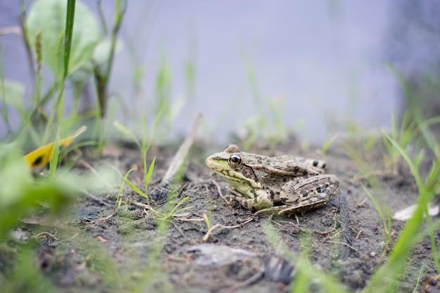 강 은행, 야생 동물에 개구리 클로즈업