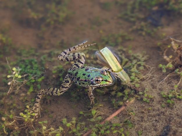자연 환경에서 개구리