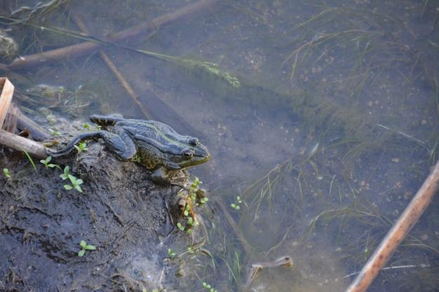 연못에 개구리입니다.
