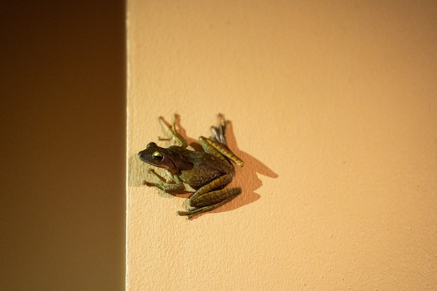 The frog is sitting on the wall. sucker frog