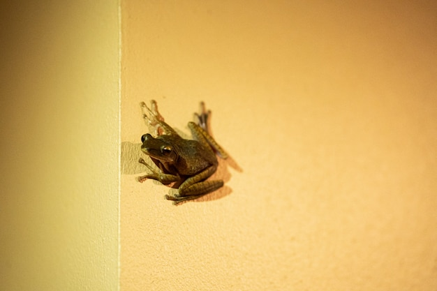 The frog is sitting on the wall.