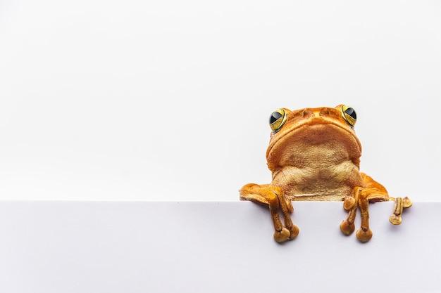 Frog isolated on white background
