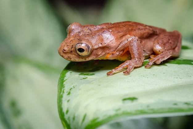 Лягушка сидела на листе, глядя вниз