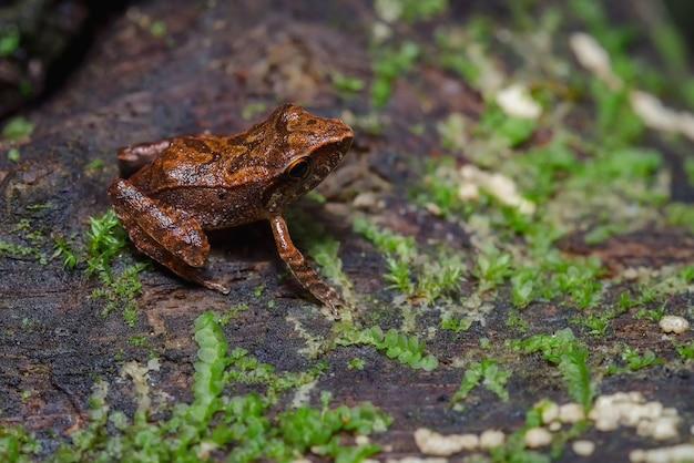 Лягушка сидит на деревянном бревне с мхом s
