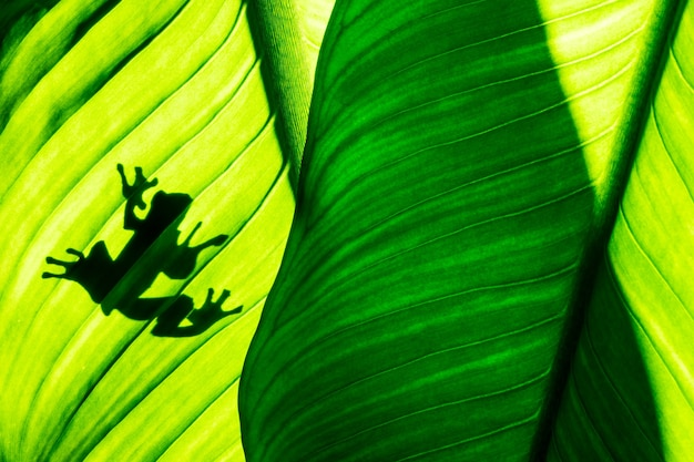 Frog shadow on natural green leaf background, tropical foliage texture.