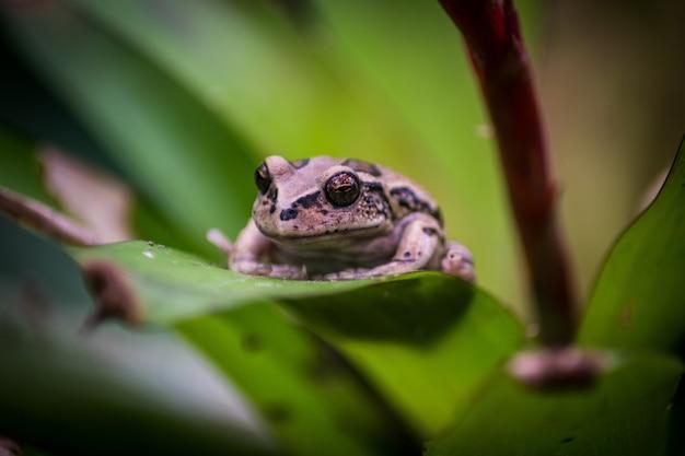 Лягушка сидит на зеленом листе растения