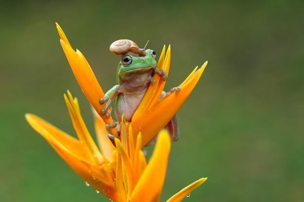Лягушка квакша