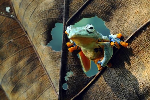 Frog tree frog