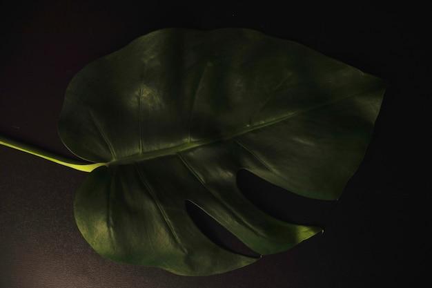 위의 alocasia 잎에서