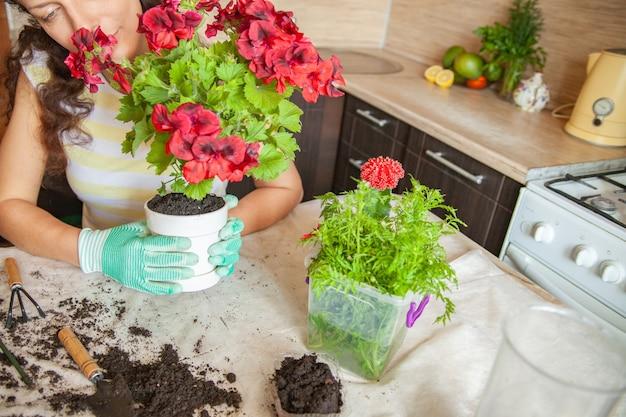 집에서 정원을 가꾸는 동안 장갑을 끼고 더러운 테이블에 식물을 이식하는 익명의 여성 정원사
