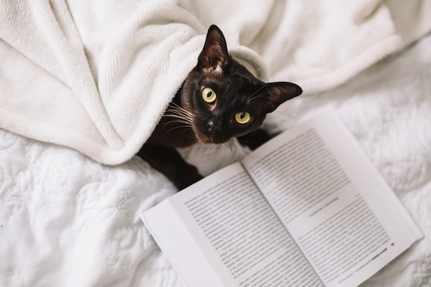 Свыше кошка рядом с книгой