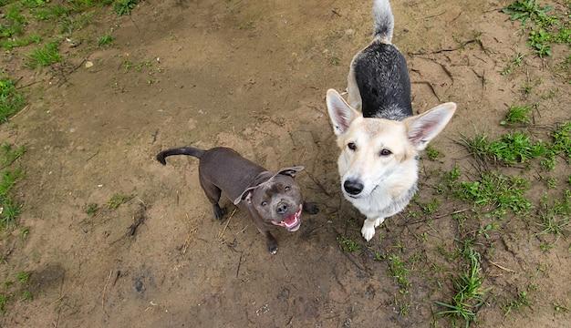 Сверху веселые смешанные породы собак, глядя в камеру