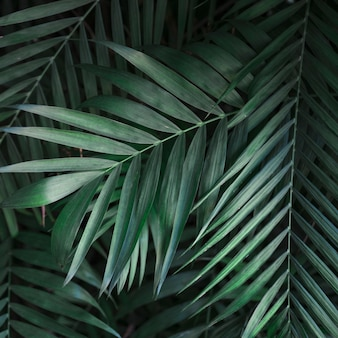 From above green palm leaves