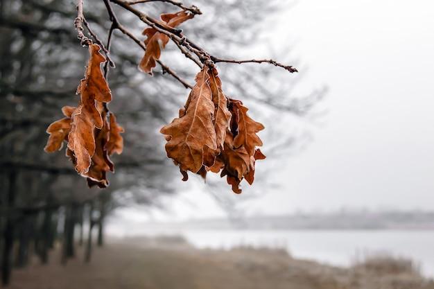 上から森や川の反対に、霧氷で覆われた乾燥した葉を持つオークの枝を吊るす