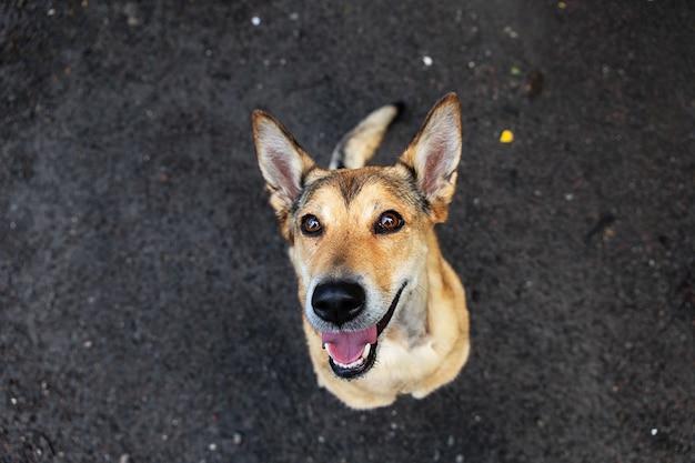 自然の中で濡れた汚れた道路に座ってカメラを見ている幸せな犬の上から