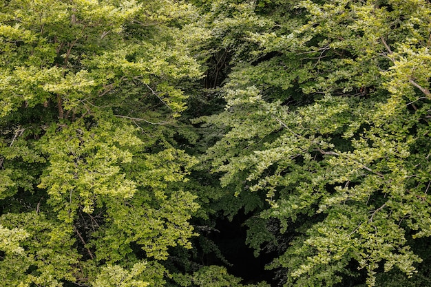 From above background of a forest of green trees