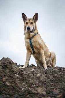 Снизу милая рыжая собака сидит на грязи