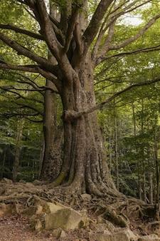 下から春にルーツを持つ緑の木々の森の風景