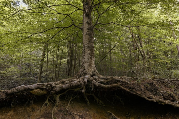 From below landscape of a forest of green trees with roots in spring