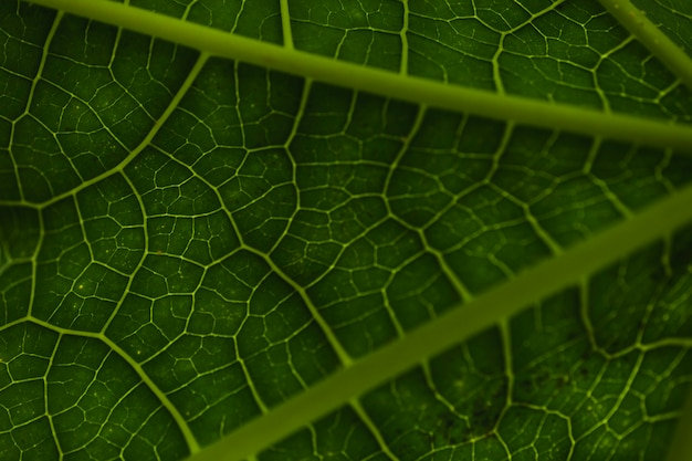 From above veins on leaf