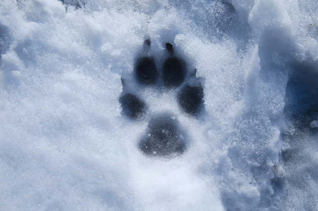 From above view at a footprint pet in the snow
