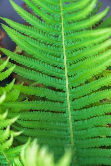 Frond. close up. background image