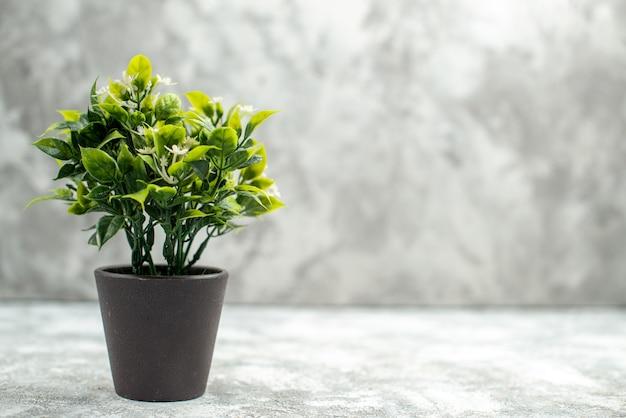 Vista frontale ravvicinata di un bel fiore in un vaso marrone su sfondo bianco