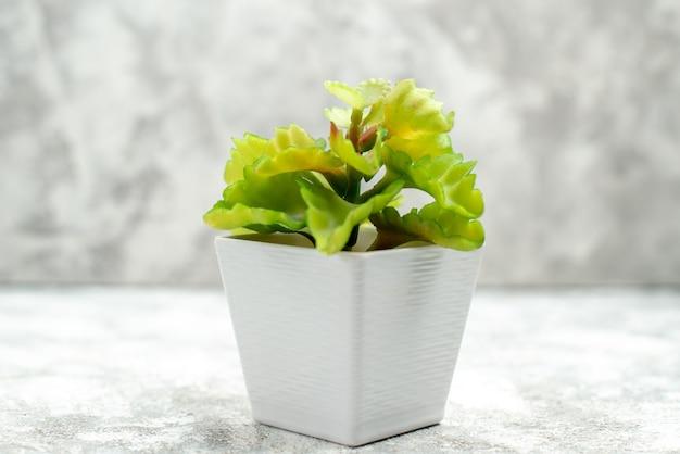 Vista frontale ravvicinata di un bel fiore in un vaso bianco su sfondo bianco