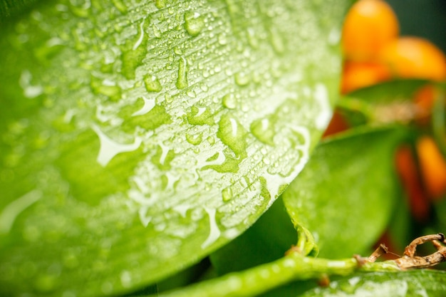 Front close view green leaf on dark vegetable tree fruit photo fresh color salad nature air