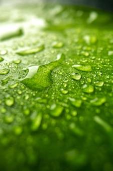 Vista frontale ravvicinata foglia verde con gocce sull'albero dell'aria verde della foresta di rugiada della natura di colore scuro