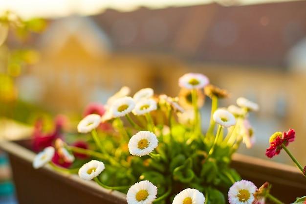 ベランダの前庭。背景に都市と鉢の花