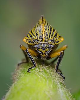 Вид спереди желтого насекомого на зеленом фоне 2