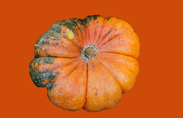Front top photo of large pumpkin isolated on orange  background