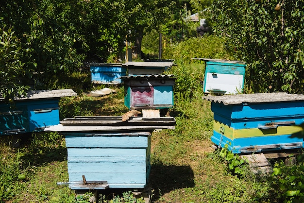 Front view. an apiary in the garden. multicolored old wooden hives in the garden.