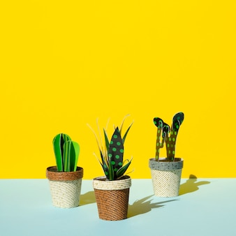 Front view arrangement of cacti on yellow background