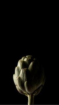 Front view artichoke