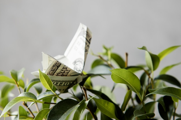 Front view of banknote oh plant
