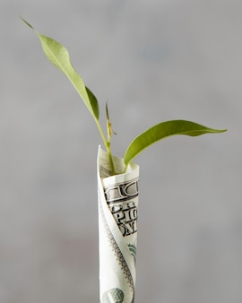 Front view of banknote wrapped around plant
