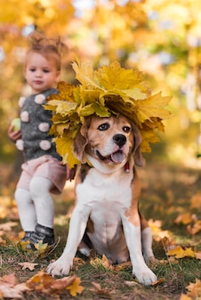 Front view of beagle dog with maple leaves hat sitting in forest