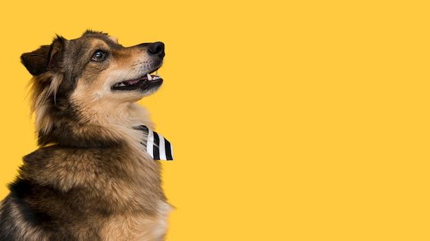 Vista frontale del bellissimo cane con copia spazio