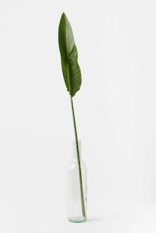 コピースペースを持つ正面植物概念